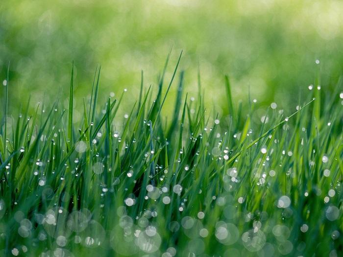Ako založiť trávnik aby bol dlho pekný?