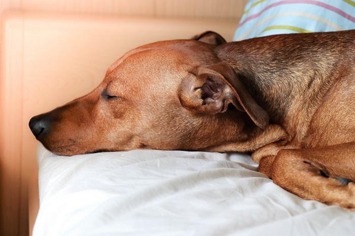 Matrac pre psa a jeho výber
